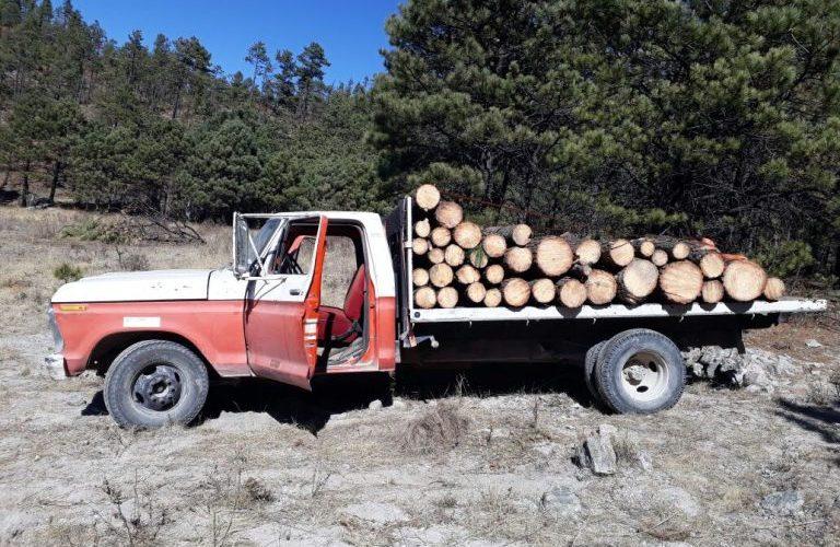 Aseguran agentes investigadores troca cargada con madera en rollo talada clandestinamente