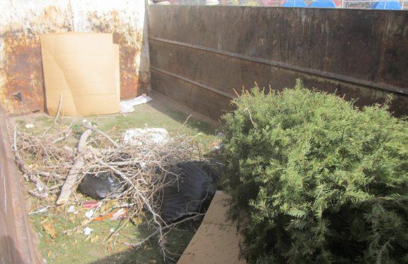 Llama Servicios Públicos a aprovechar última semana para deshacerse de los pinos navideños naturales en Ciudad Juarez