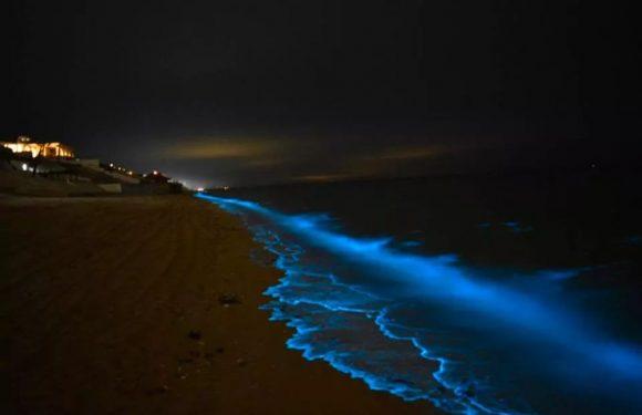 Captan espectacular efecto por bioluminiscencia en Puerto Peñasco (FOTOS)