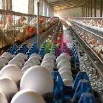 Productora de huevo en Coahuila